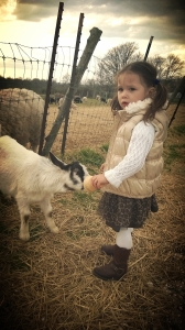 Bean and the baby goats